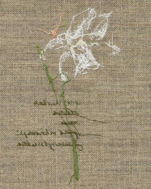 http://www.archive-host2.com/membres/images/1336321151/fleurs/narcisses/blanc_detete/bdt-dos.jpg