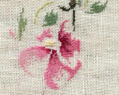 http://www.archive-host2.com/membres/images/1336321151/fleurs/passerose/j3_d1.jpg