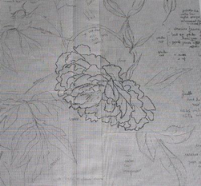 http://www.archive-host2.com/membres/images/1336321151/fleurs/pivoines/cornu/mc_0_dessin_0.jpg