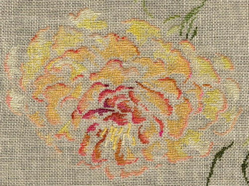 http://www.archive-host2.com/membres/images/1336321151/fleurs/pivoines/cornu/mc_z_fgv.jpg