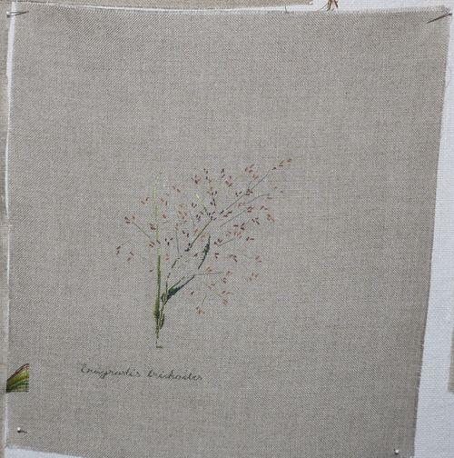 http://www.archive-host2.com/membres/images/1336321151/fleurs/poacees/era-0.jpg