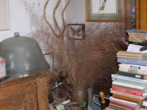 http://www.archive-host2.com/membres/images/1336321151/fleurs/poacees/era-1.jpg