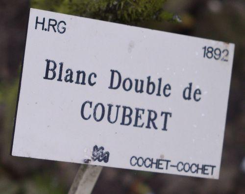 http://www.archive-host2.com/membres/images/1336321151/fleurs/roses/Blanc_double/BddC_paneau.jpg