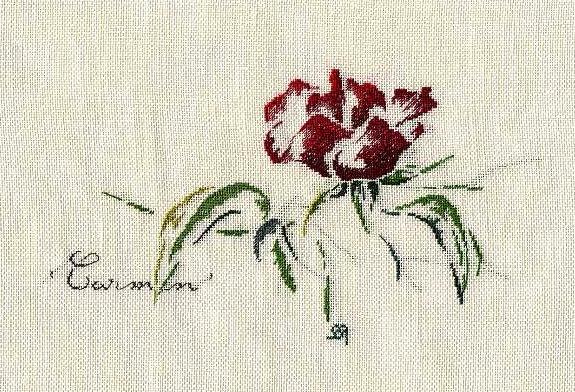 http://www.archive-host2.com/membres/images/1336321151/fleurs/roses/Carmen/Carmen.jpg