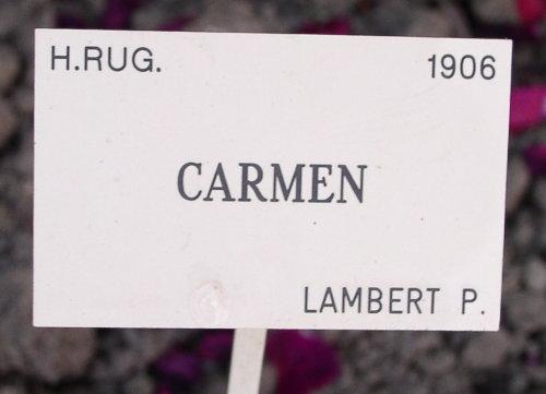 http://www.archive-host2.com/membres/images/1336321151/fleurs/roses/Carmen/Carmen_label.jpg