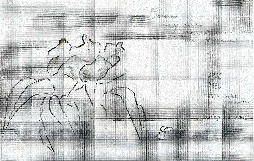 http://www.archive-host2.com/membres/images/1336321151/fleurs/roses/Carmen/carmen_dessin.jpg