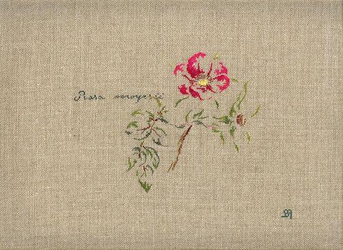 http://www.archive-host2.com/membres/images/1336321151/fleurs/roses/Rosa_moeysii/moyesii-.jpg