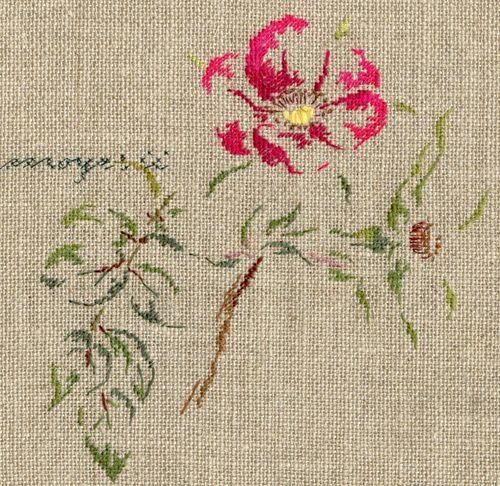 http://www.archive-host2.com/membres/images/1336321151/fleurs/roses/Rosa_moeysii/moyesii-d.jpg