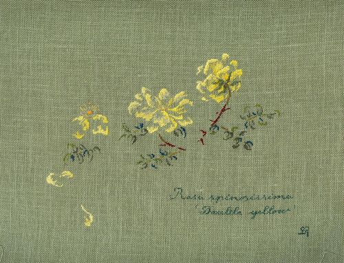 http://www.archive-host2.com/membres/images/1336321151/fleurs/roses/Rosa_spinosissima/double_Yellow.jpg