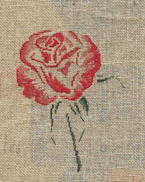 http://www.archive-host2.com/membres/images/1336321151/fleurs/roses/manque/manque.jpg