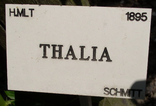 http://www.archive-host2.com/membres/images/1336321151/fleurs/roses/thalia/thalia_label.jpg