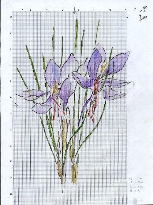 http://www.archive-host2.com/membres/images/1336321151/fleurs/safran/sB_dessin.jpg