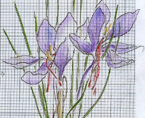 http://www.archive-host2.com/membres/images/1336321151/fleurs/safran/sB_dessin_G.jpg