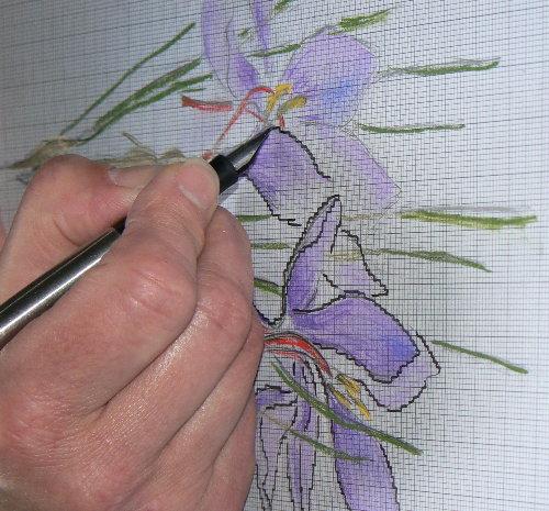 http://www.archive-host2.com/membres/images/1336321151/fleurs/safran/sfr_d4.jpg