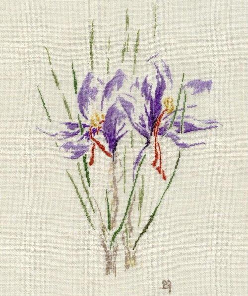 http://www.archive-host2.com/membres/images/1336321151/fleurs/safran/sfrz_B.jpg