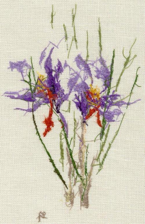 http://www.archive-host2.com/membres/images/1336321151/fleurs/safran/sfrz_dos.jpg