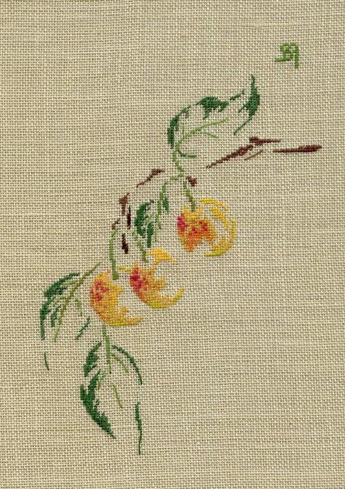 http://www.archive-host2.com/membres/images/1336321151/fruits/mirabelles.jpg
