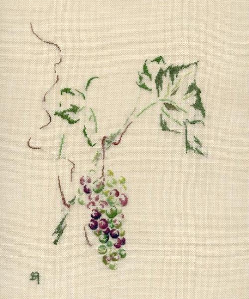 http://www.archive-host2.com/membres/images/1336321151/fruits/vitis_brandt.jpg