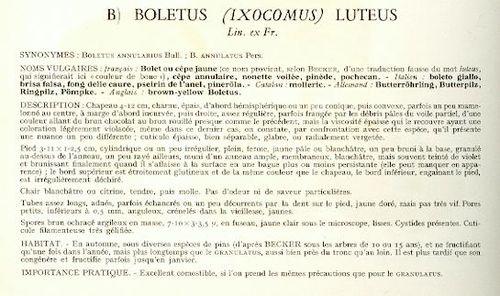 http://www.archive-host2.com/membres/images/1336321151/legumes/champignons/cepe_SMAM/boletus_txt.jpg