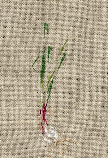 http://www.archive-host2.com/membres/images/1336321151/legumes/cive.jpg