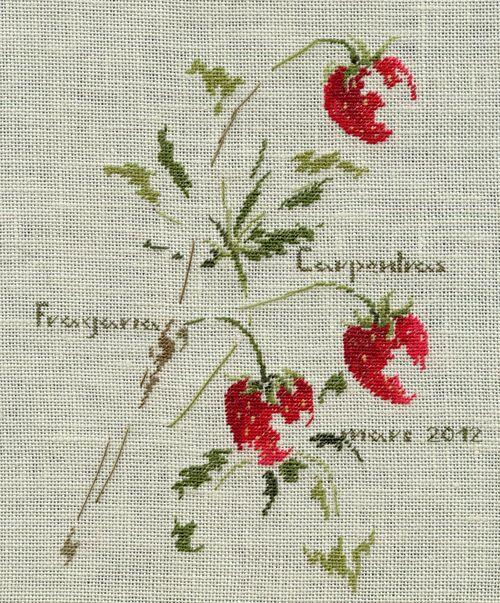 http://www.archive-host2.com/membres/images/1336321151/legumes/fraises/Carpentras-1.jpg