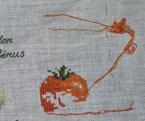 http://www.archive-host2.com/membres/images/1336321151/legumes/tomates/auriga.jpg