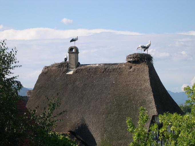 Ecomusée d'Alsace - Cigognes